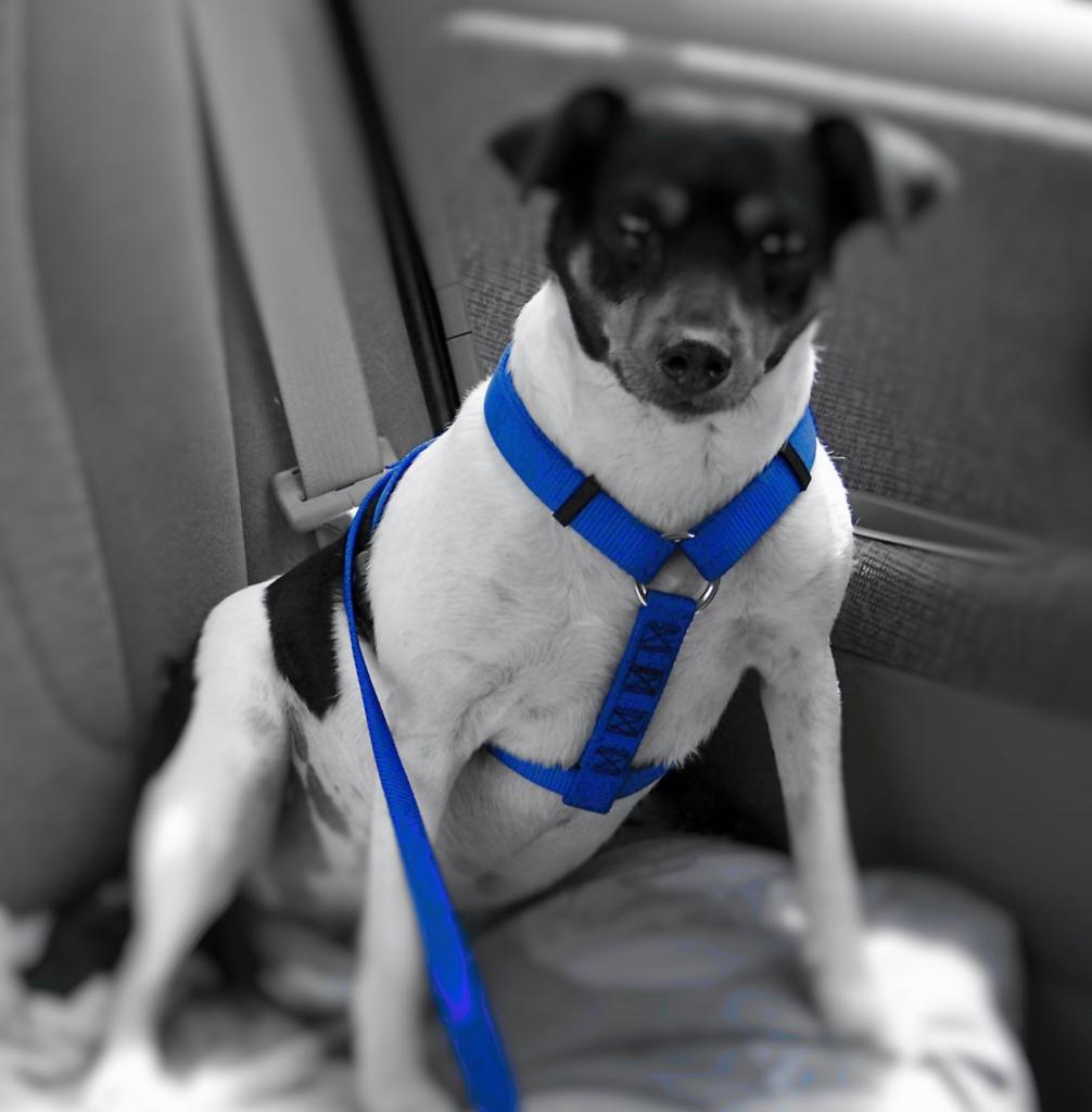 transporte seguro de mascotas